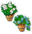white and blue home flowers in hanging pots vector image