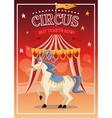 Horse cartoon of circus vector image