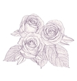 Bouquet with three roses isolated on white vector image