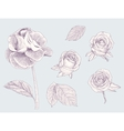 Collection of engraved roses and leafs vector image