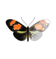 Butterfly Heliconius vector image