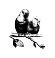 two birds parrots in eps vector image
