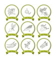 hand drawn sketch vegetable set vector image