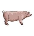Doodle Pig vector image