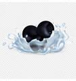 blackberries or blackcurrant in clean water drops vector image