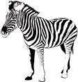 Zebra in profile vector image vector image
