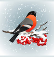 bullfinch sitting on snow covered branch of vector image