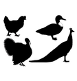 birds collage vector image