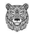 Bear or grizzly head isolated on white background vector image