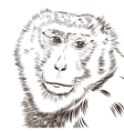 Chimpanzee drawing Animal artistic use vector image