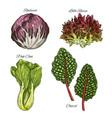salads or leafy vegetables icons set vector image