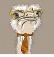 funny Ostrich Bird hipster vector image