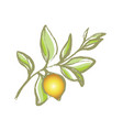 lemon sketch vector image