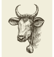 Hand drawn cow bull Sketch a farm animal vector image