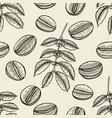 coffee tree branches vector image