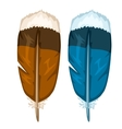 Brown and blue bird feathers isolated vector image