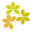 chestnut abstract stylized fall leaves vector image