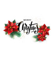 christmas design of poinsettia and fir branches vector image