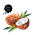 Hand drawn watercolor painting fruit coconut on vector image