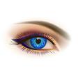 female blue eye vector image