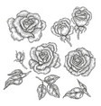 hand drawn rose flowers and leaves isolated on vector image