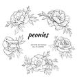 peonies set vector image