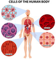 Cells of the human body vector image vector image