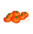 icon tomato vector image