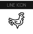 isolated cockerel outline chicken element vector image
