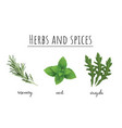 herbs and spices color set vector image