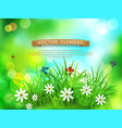 green grass with white flowers butterflies vector image vector image