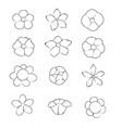 Hand draw brush flower on white background vector image