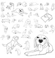 Drawing set of adorable beagle dog vector image