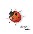 Ladybird on a white background vector image