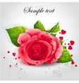 Red rose on a gray background vector image