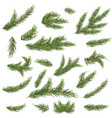 set of fir branches christmas tree vector image