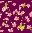 pink cherry sakura flower blossoms seamless vector image