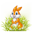 Cartoon rabbit on grass background vector image