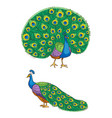 bright peacock vector image