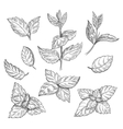Mint hand sketch Peppermint vector image