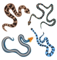 colorful tropical snakes collection set top vector image