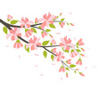 beautiful cherry blossom branches vector image