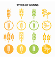 Types of grains cereals icons - wheat rye barle vector image