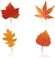 vibrantly colored autumn leaves vector image
