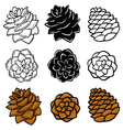 Set Wit pinecones vector image
