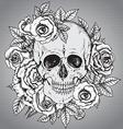 with hand drawn human skull with rose flower vector image