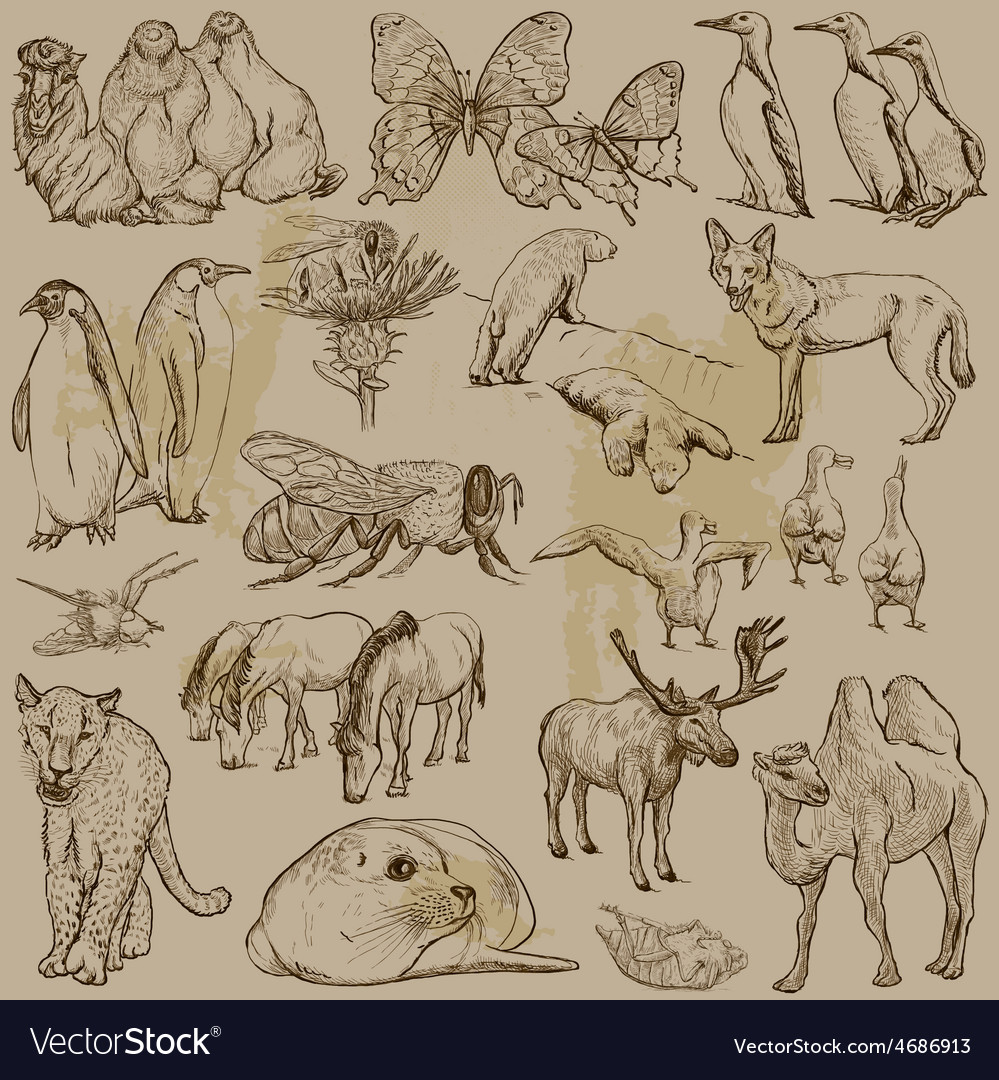 Animals  hand drawn pack vector