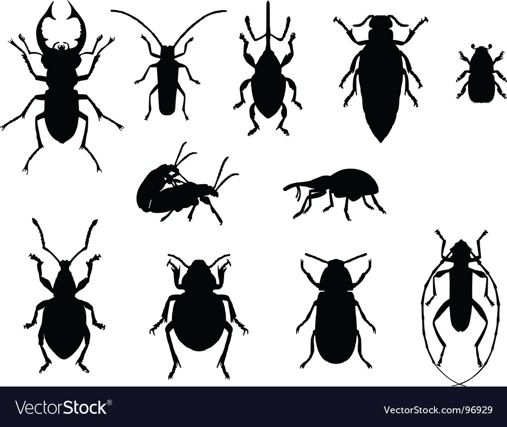 Collection of beetles vector