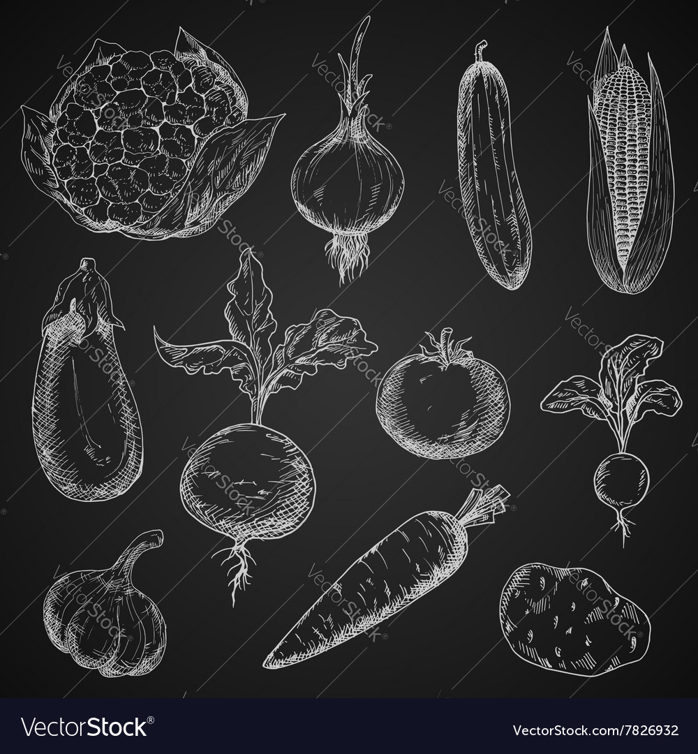 Fresh organic vegetables sketches set vector