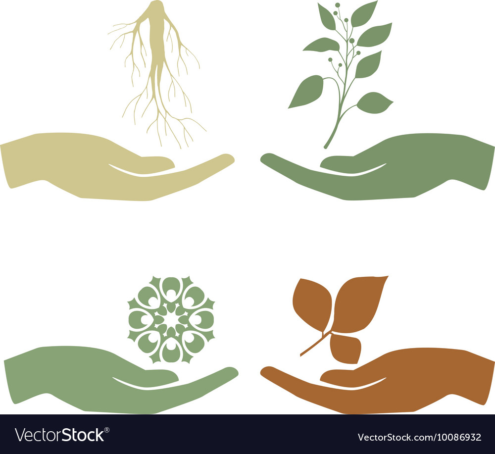 Hand holding plant growth concept vector